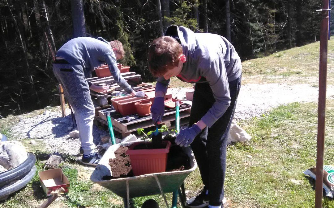 Tudi za vrtnarjenje se najde čas v času šole na daljavo