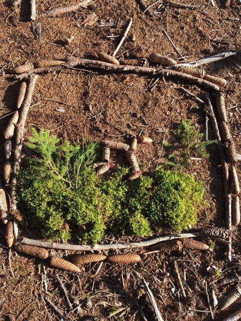 Ustvarjanje v naravi